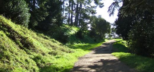 krishnamurit-nature-walk-1